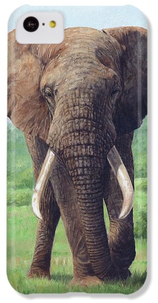African Elephant IPhone 5c Case by David Stribbling