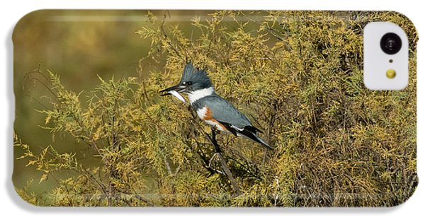 Belted Kingfisher With Fish IPhone 5c Case by Anthony Mercieca
