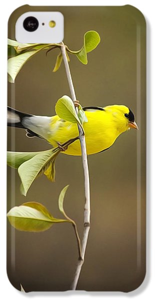 American Goldfinch IPhone 5c Case by Christina Rollo