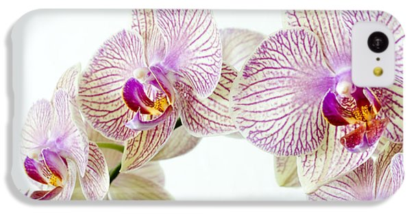 Phalaenopsis Orchid Phalaenopsis Sp IPhone 5c Case by Lawrence Lawry