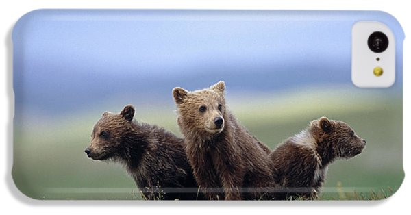 4 Young Brown Bear Cubs Huddled IPhone 5c Case by Eberhard Brunner