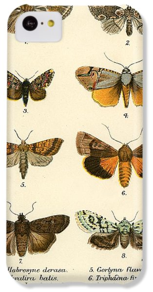 Butterflies IPhone 5c Case by English School