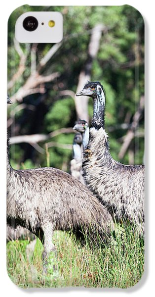 Emu (dromaius Novaehollandiae IPhone 5c Case by Martin Zwick