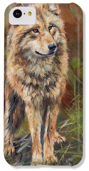 Grey Wolf IPhone 5c Case by David Stribbling