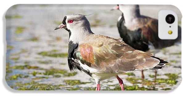 A Flock Of Southern Lapwings IPhone 5c Case by Ashley Cooper