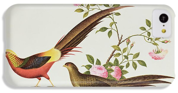 A Golden Pheasant IPhone 5c Case by Chinese School