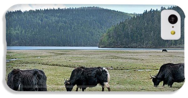 A Herd Of Yaks In Potatso National Park IPhone 5c Case by Tony Camacho
