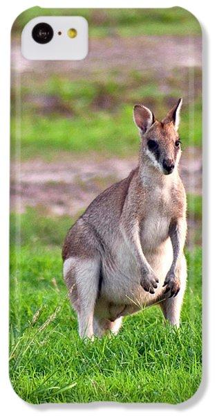 A Male Grey Kangaroos (macropus IPhone 5c Case by Miva Stock