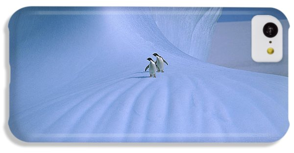 Adelie Penguins On Iceberg Antarctica IPhone 5c Case by Peter Sinden