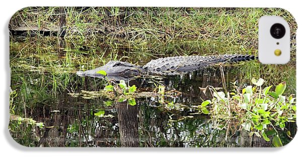 Alligator In Swamp IPhone 5c Case by Jim West