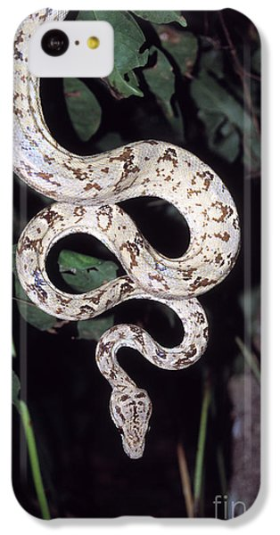 Amazon Tree Boa IPhone 5c Case by James Brunker