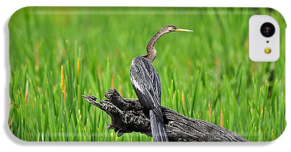 American Anhinga IPhone 5c Case by Al Powell Photography USA