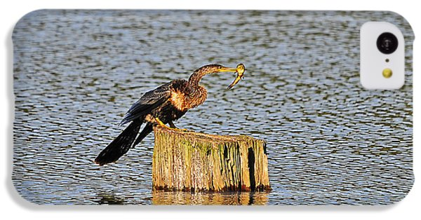American Anhinga Angler IPhone 5c Case by Al Powell Photography USA