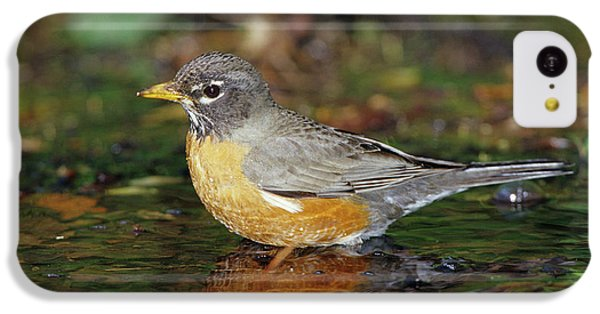American Robin (turdis Migratorius IPhone 5c Case by Richard and Susan Day