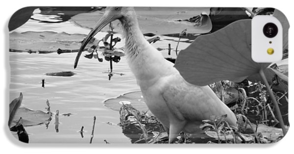 American White Ibis Black And White IPhone 5c Case by Dan Sproul