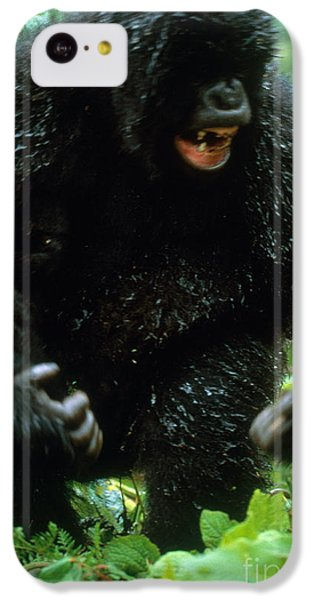 Angry Mountain Gorilla IPhone 5c Case by Art Wolfe