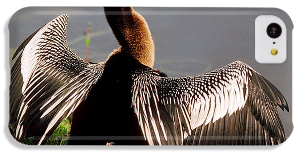 Anhinga Anhinga Anhinga Drying Plumage IPhone 5c Case by Millard H. Sharp