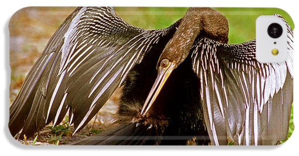 Anhinga Anhinga Anhinga Preening IPhone 5c Case by Millard H. Sharp