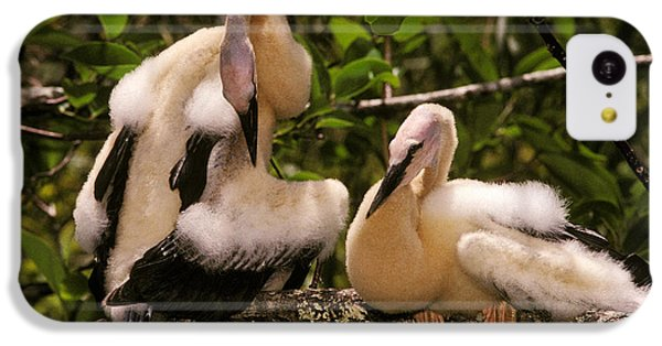 Anhinga Chicks IPhone 5c Case by Ron Sanford