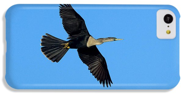 Anhinga Female Flying IPhone 5c Case by Anthony Mercieca