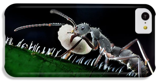 Ant Carrying Larva IPhone 5c Case by Melvyn Yeo