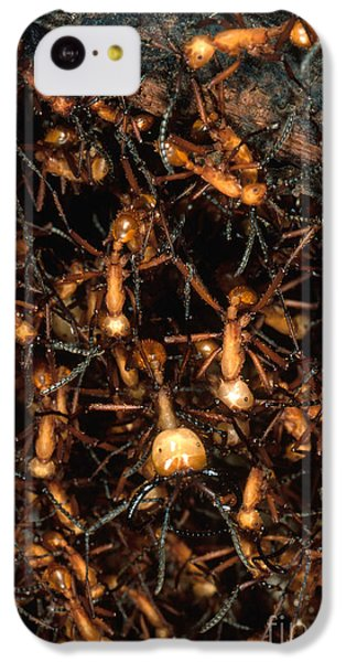 Army Ant Bivouac Site IPhone 5c Case by Gregory G. Dimijian, M.D.