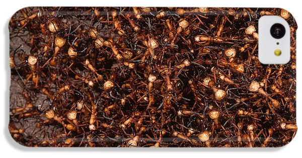Army Ants IPhone 5c Case by Art Wolfe
