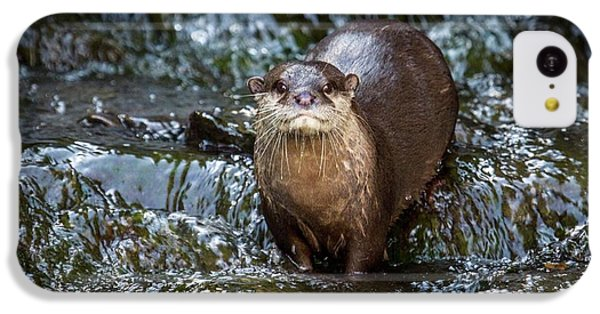 Asian Small-clawed Otter IPhone 5c Case by Paul Williams