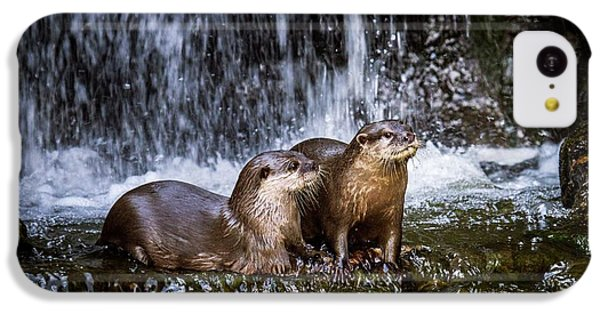 Asian Small-clawed Otters IPhone 5c Case by Paul Williams