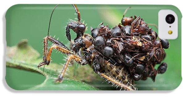 Assassin Bug Nymph With Ants IPhone 5c Case by Melvyn Yeo