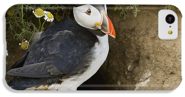 Atlantic Puffin At Burrow Skomer Island IPhone 5c Case by Sebastian Kennerknecht