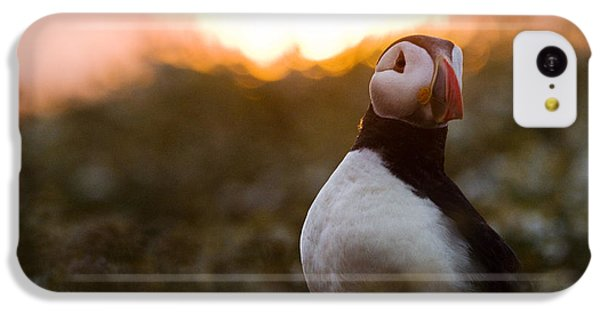 Atlantic Puffin At Sunrise Skomer IPhone 5c Case by Sebastian Kennerknecht