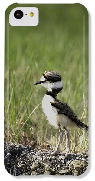 Baby Killdeer 2 IPhone 5c Case by Thomas Young