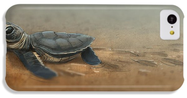 Baby Turtle IPhone 5c Case by Aaron Blaise