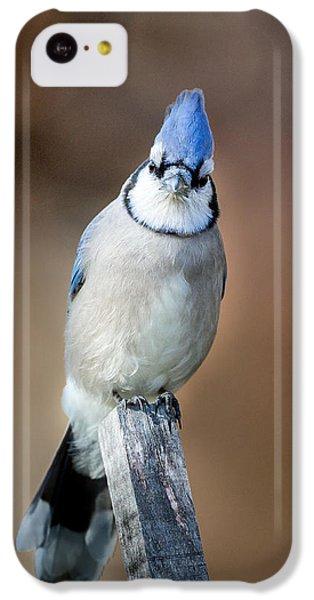 Backyard Birds Blue Jay IPhone 5c Case by Bill Wakeley