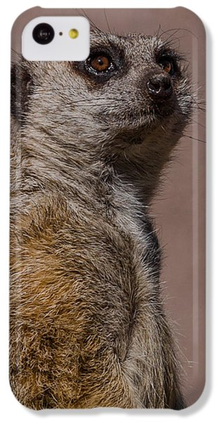 Bad Whisker Day IPhone 5c Case by Ernie Echols