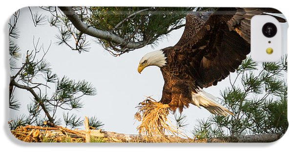 Bald Eagle Building Nest IPhone 5c Case by Everet Regal