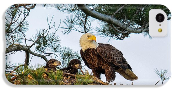 Bald Eagle With Eaglets  IPhone 5c Case by Everet Regal