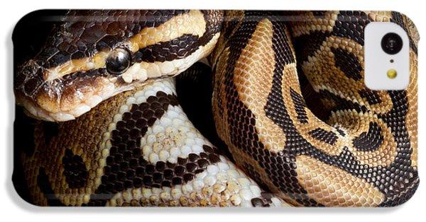 Ball Python Python Regius IPhone 5c Case by David Kenny