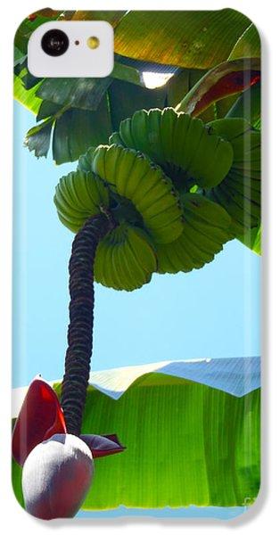 Banana Stalk IPhone 5c Case by Carey Chen