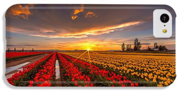 Beautiful Tulip Field Sunset IPhone 5c Case by Mike Reid