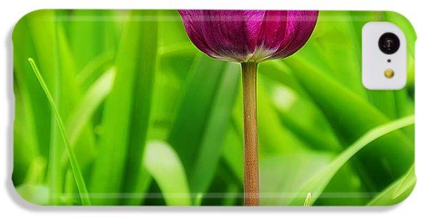 Beauty At A Glance- Purple Gems- Purple Tulips Rhode Island Tulips Purple Flower IPhone 5c Case by Lourry Legarde