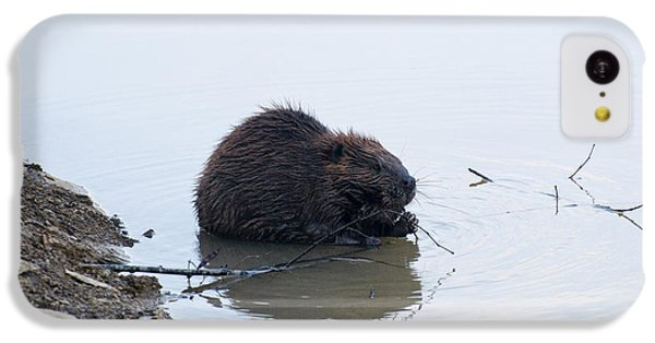 Beaver In The Shallows IPhone 5c Case by Chris Flees