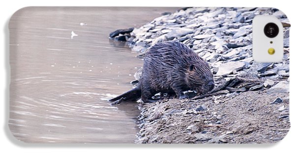 Beaver On Dry Land IPhone 5c Case by Chris Flees