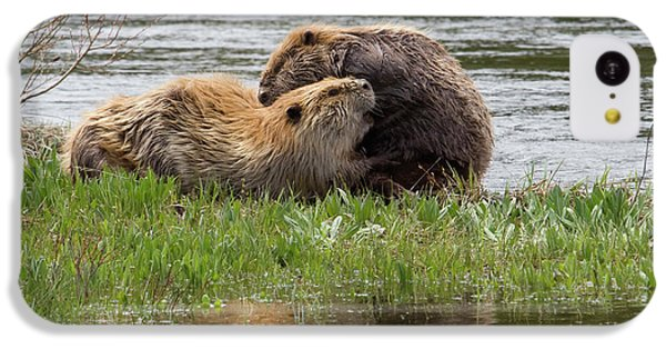 Beaver Pair Grooming One Another IPhone 5c Case by Ken Archer