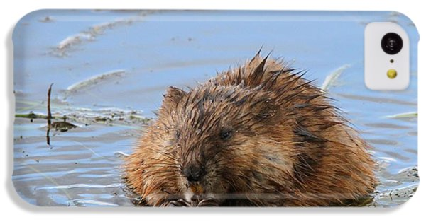 Beaver Portrait IPhone 5c Case by Dan Sproul