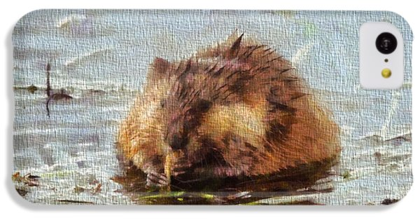 Beaver Portrait On Canvas IPhone 5c Case by Dan Sproul