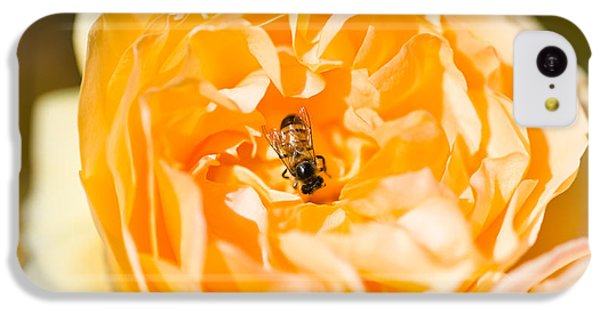Bee Pollinating A Yellow Rose, Beverly IPhone 5c Case by Panoramic Images