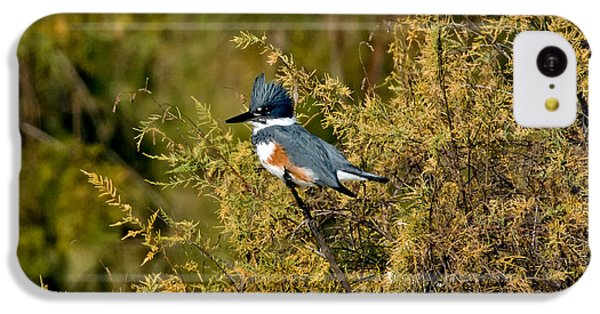 Belted Kingfisher Female IPhone 5c Case by Anthony Mercieca