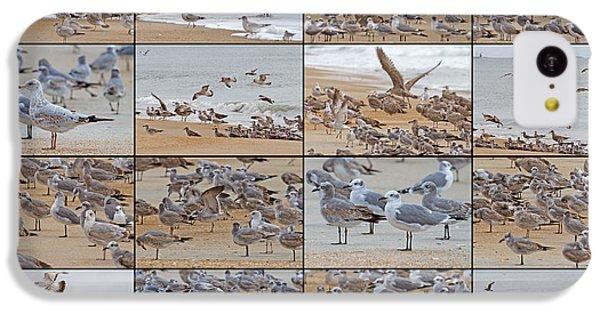 Birds Of Many Feathers IPhone 5c Case by Betsy Knapp